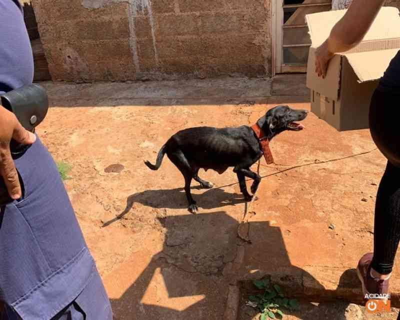 Cadela e quatro filhotes são resgatados vítimas de maus-tratos em Guaíra, SP