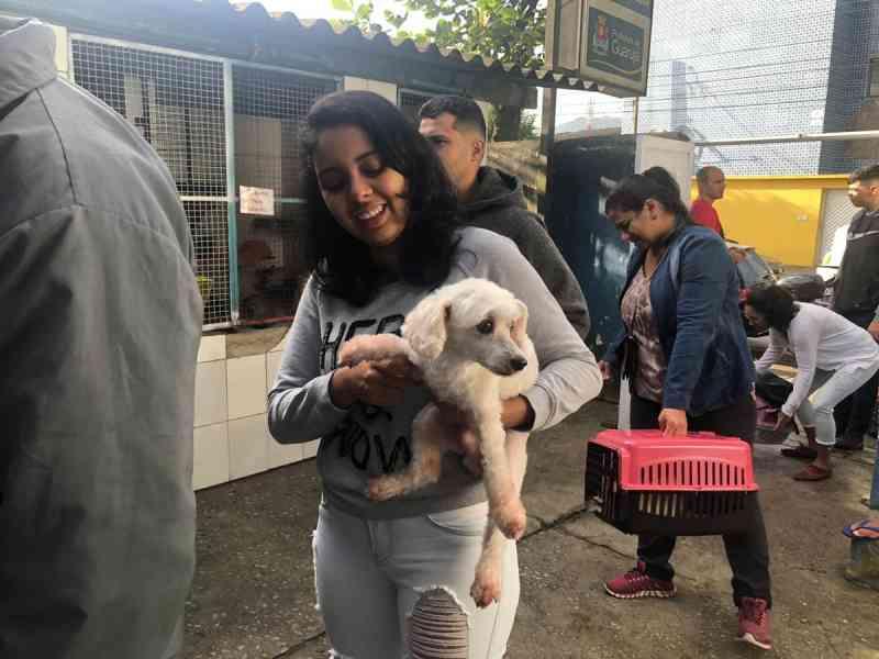 Guarujá (SP) abre 400 vagas para castração de cães e gatos gratuitamente