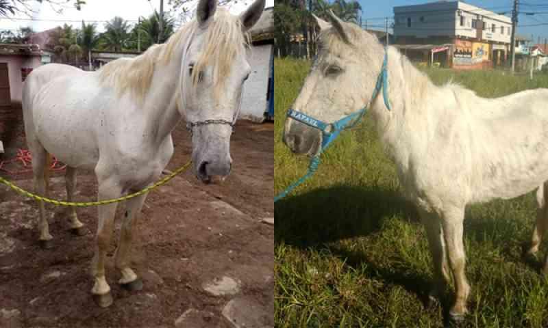 Cavalos resgatados de maus-tratos vão para a adoção em Itanhaém, SP