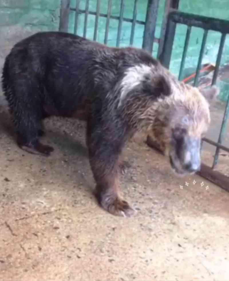 Santuário de animais no interior de SP vai receber mais uma ursa