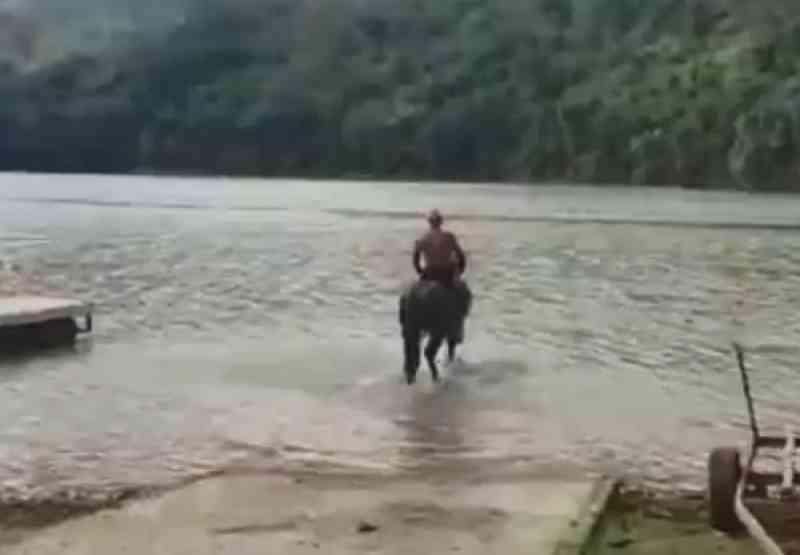 Polícia apura maus-tratos após cavalo morrer afogado em represa de Nazaré Paulista, SP