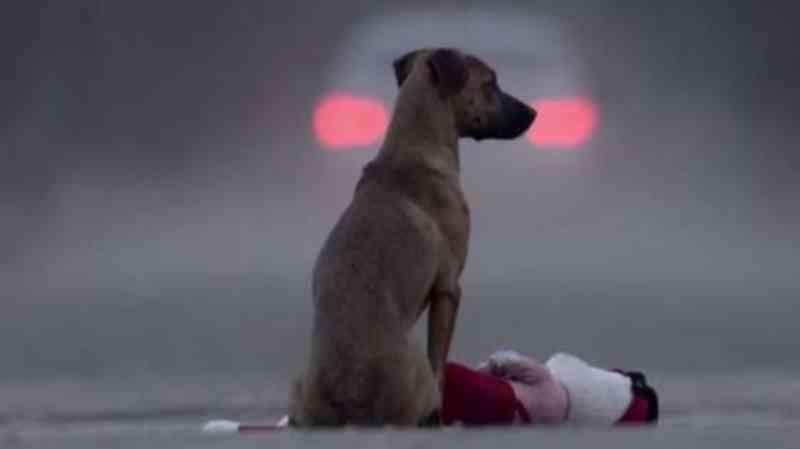 Nova Odessa (SP) isenta IPTU de clínicas veterinárias que atendem animais de rua