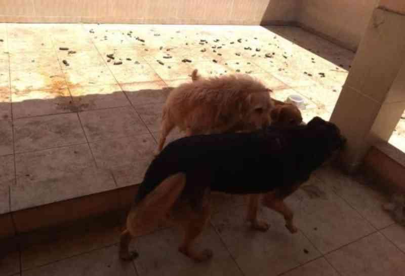 Animais vítimas de maus-tratos são resgatados no City Bussocaba, em Osasco, SP