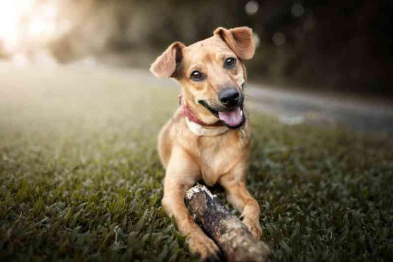 Osasco (SP) inicia microchipagem gratuita de animais no dia 19