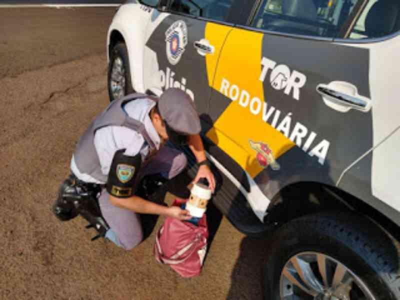 Passageiro de ônibus é preso com cinco canários da terra em Ourinhos, SP