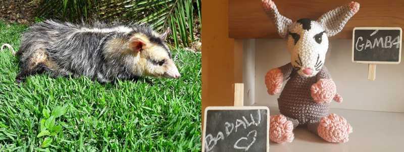 A história de Babalu marcou a vida da cuidadora, que até fez um animal de pelúcia para se lembrar do que viveu — Foto: Mireille Macarini Salera Penteado/Acervo Pessoal
