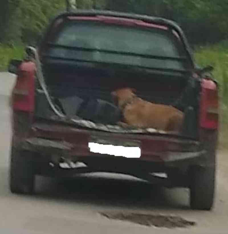 Cachorro é abandonado na Avenida Santa Clara em Ribeirão Pires, SP