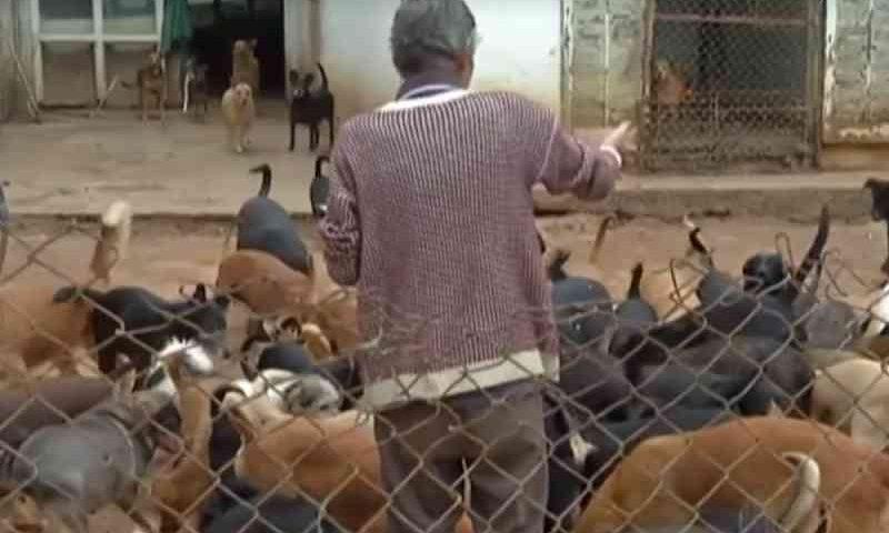 Casal que cria 120 cães achados na rua, em Santa Isabel (SP), reclama de falta de assistência da Prefeitura