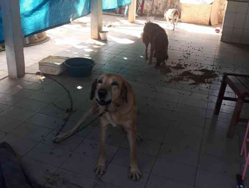 Homem leva multa de R$ 5 mil por abandonar 5 cães após se mudar de Santa Rita do Passa Quatro, SP