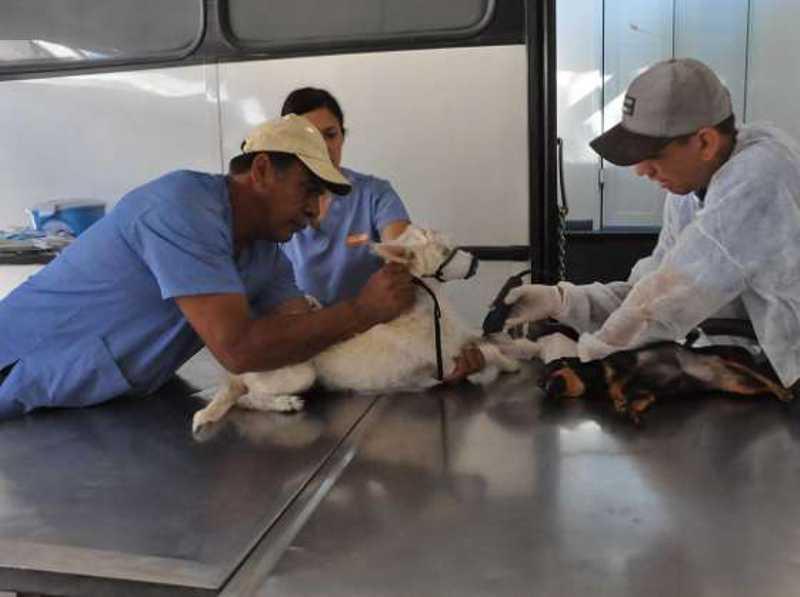 Americana (S) realiza mutirão de castração animal