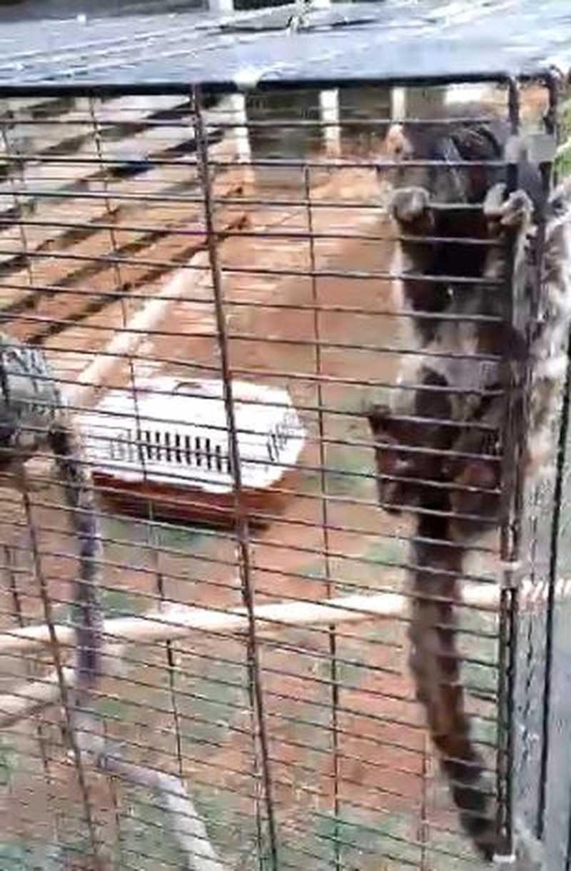 Saguis estão entre os animais apreendidos em Araçoiaba da Serra — Foto: Arquivo Pessoal