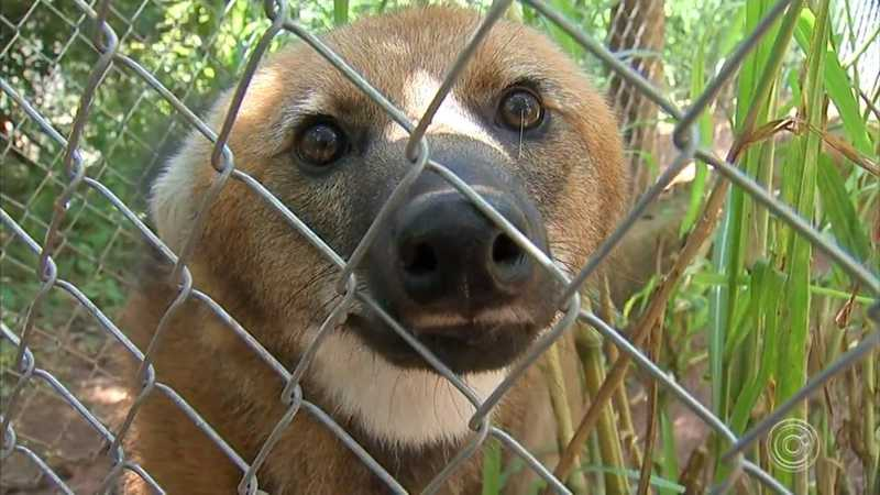 Associação optou por se concentrar nos mais de 800 animais que abriga — Foto: TV TEM/Reprodução