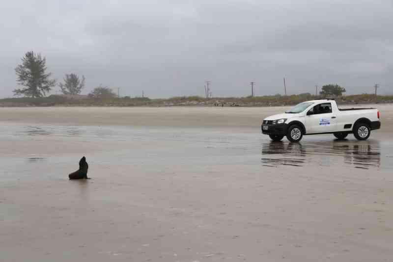 Lobo-marinho reabilitado é solto no litoral de SP: 'Gratificante'