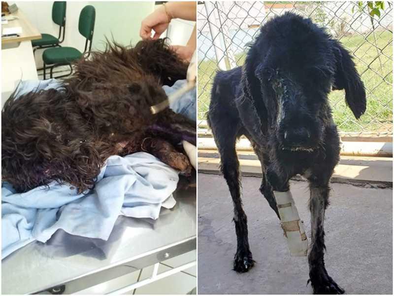 Antes e depois do cão ter sido resgatado por voluntários em Novo Horizonte — Foto: Arquivo Pessoal/Marco Antônio