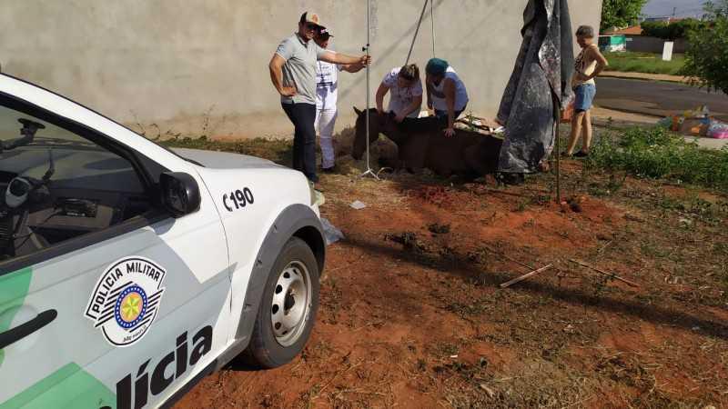 Égua foi encontrada em terreno baldio no bairro Florença. Foto: Polícia Ambiental/Divulgação