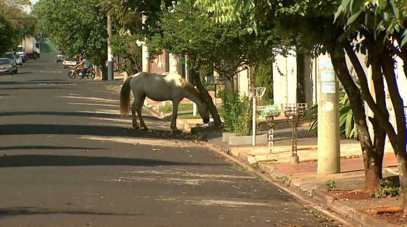 Égua come lixo em calçada do bairro Jardim Palmares em Ribeirão Preto, SP — Foto: Reprodução/EPTV