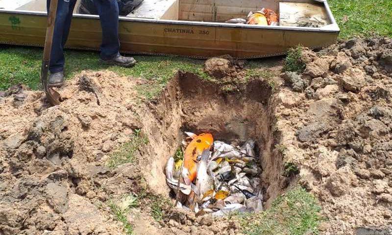 Quantidade de peixes mortos preocupa moradores em Sorocaba — Foto: Eugênio Vila Keppler/Arquivo pessoal