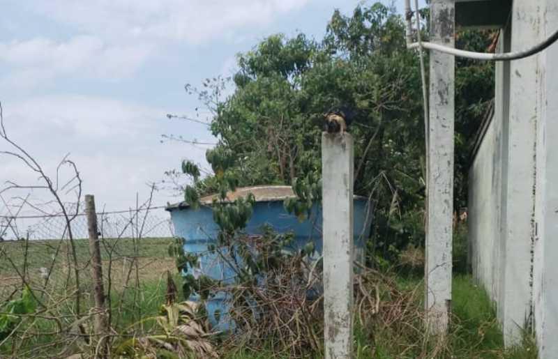 Flagrante feito pela GM em chácara (Foto: GM de Sumaré)