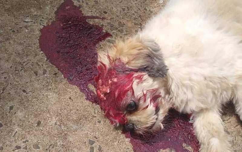 O animal, que tinha o nome de Bob, não resistiu ao ferimento e morreu na hora   (Reprodução/Internet)