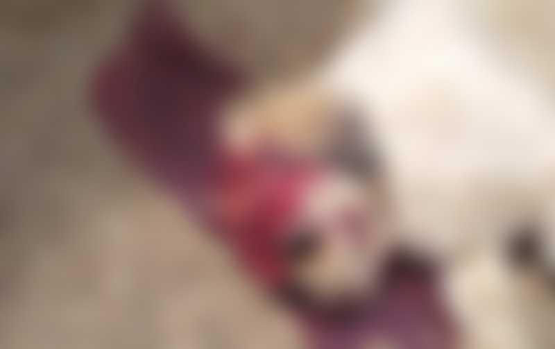 Cão é morto a tijolada após urinar em roda de carro em Tabatinga, SP