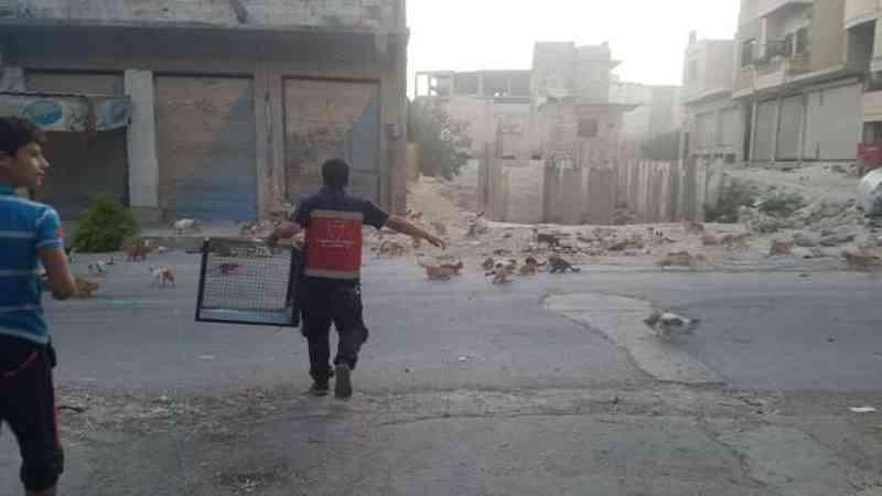 Rapaz corre para dentro da zona de guerra para salvar gatos abandonados