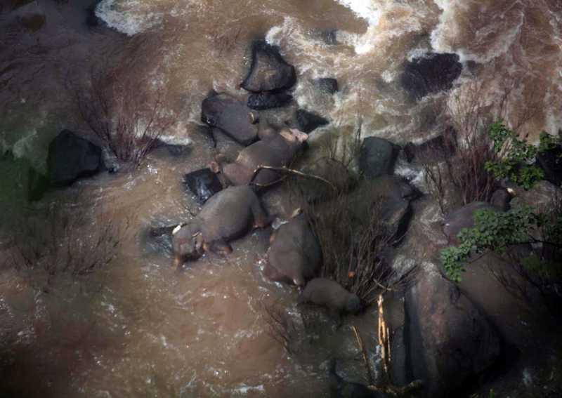 Elefantes morrem a tentar salvar bebé em cascata na Tailândia