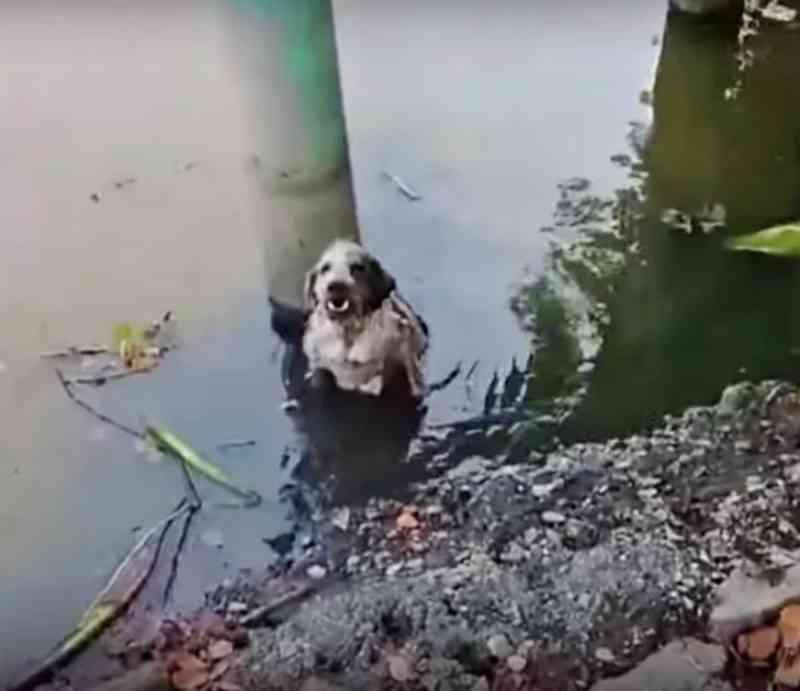 Cadela é agredida e jogada na água após implorar comida para seus filhotes