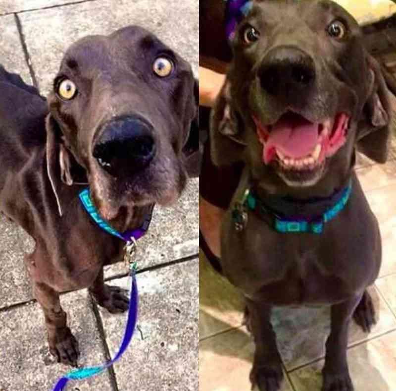 Cão abandonado que comia galhos e pedras para sobreviver é adotado e nunca mais passará fome