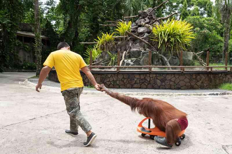 Centenas de zoológicos e aquários acusados de maus-tratos a animais
