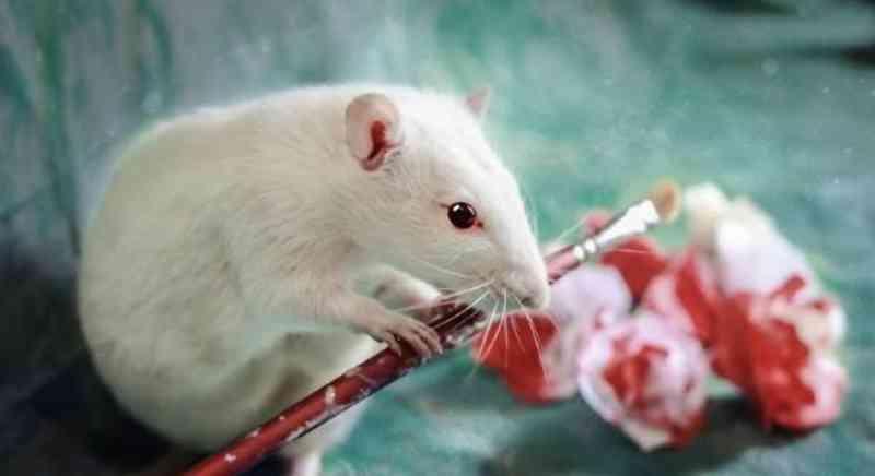 Teste em animais: indústria terá de citar experimento no rótulo, diz CCJ da Câmara Federal