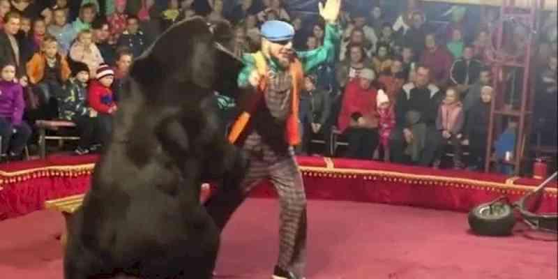 Urso se revolta contra treinador e o ataca em pleno picadeiro; vídeo viralizou nas redes
