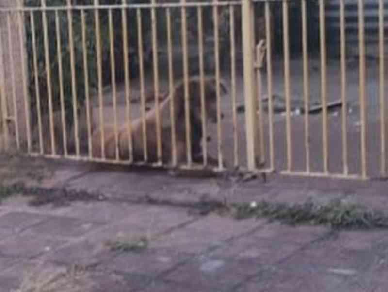 Após tutora abandonar cadelas, uma morre e outra é resgatada no bairro do Pinheiro, em Maceió
