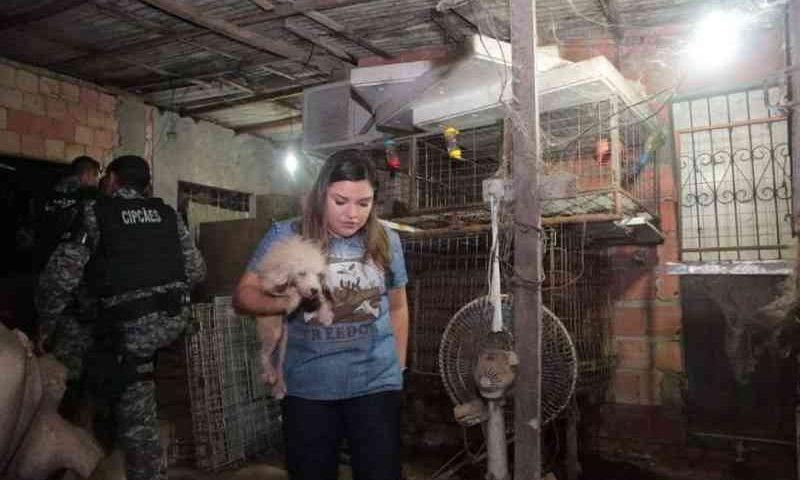 Cativeiro clandestino de animais é desmontado na Zona Leste de Manaus, AM