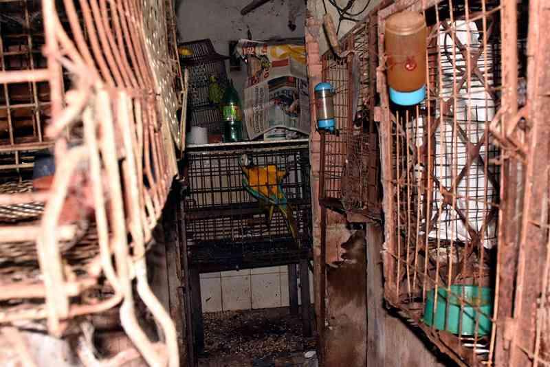 Entre silvestres e domésticos, 107 animais resgatados são enviados para Ibama e clínicas de Manaus, AM
