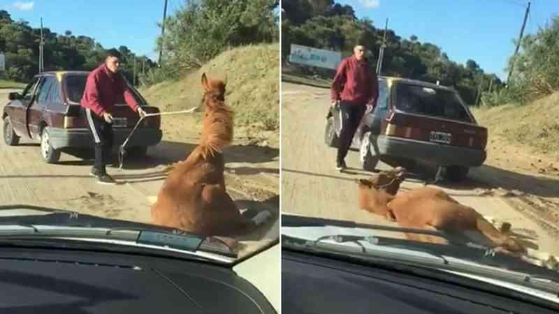Maus-tratos brutais a um cavalo na Argentina: amarrado a um carro, foi arrastado até desmaiar