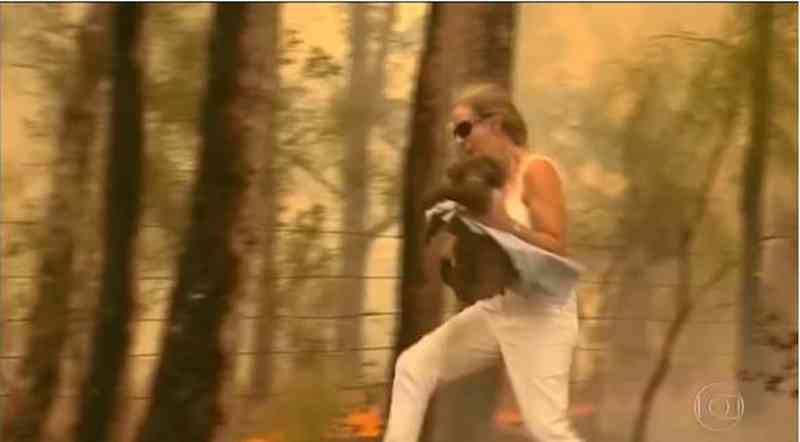 Coala que havia sido resgatado de incêndio morre por causa de queimaduras