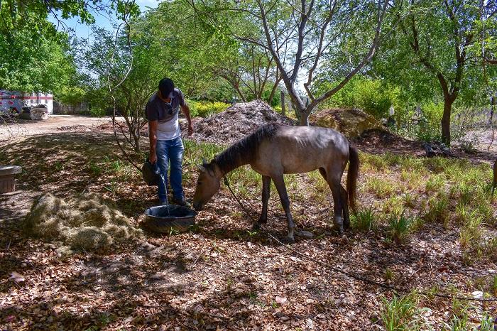 Égua abandonada com a pata quebrada é resgatada e se recupera em viveiro