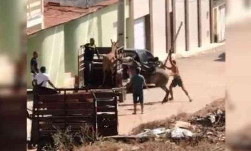 Homem agride cavalo com pedaço de madeira, em Jacobina, BA