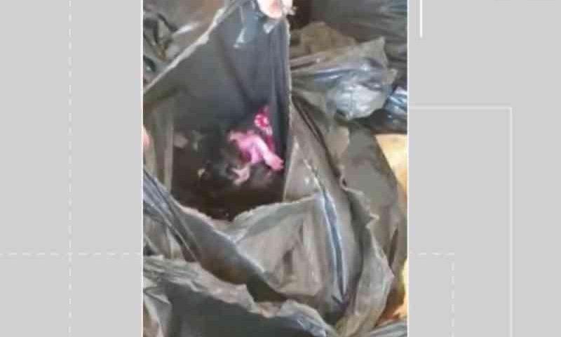 Diretor de resort na BA diz que gatinhos achados presos em saco de lixo no local foram colocados por funcionário; ele foi afastado