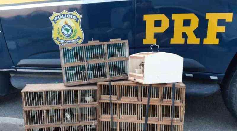 PRF resgata aves silvestres transportadas irregularmente em bagageiro de ônibus na Bahia