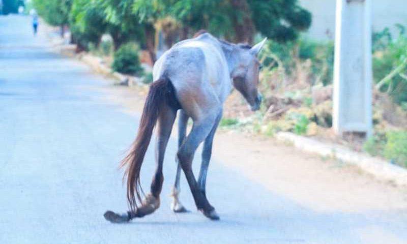 Sofrimento do animal foi registrado na manhã deste sábado (16). (Foto: Reprodução)