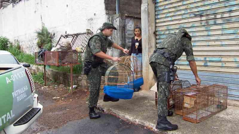 Comércio ilegal retira 38 milhões de animais da natureza todos os anos no Brasil