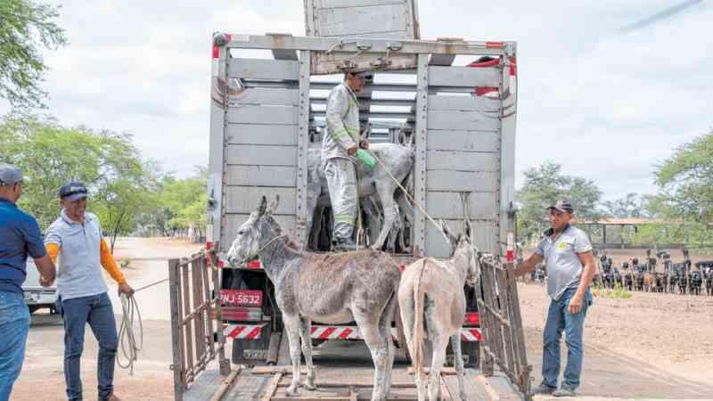 Parceria público-privada ajuda a retirar animais das rodovias no Ceará