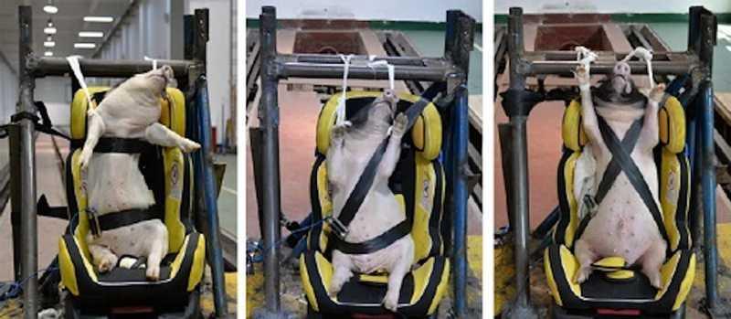 A PETA divulgou várias imagens que mostram o que a associação considerou ser um ato bárbaro para com os animais