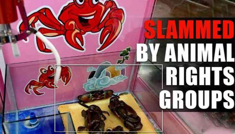 Máquinas 'Grab-A-Crab' censuradas por grupos de direitos dos animais em Cingapura