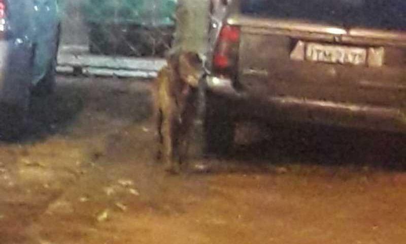Cachorro foi morto com golpes de taco de beisebol — Foto: Reprodução