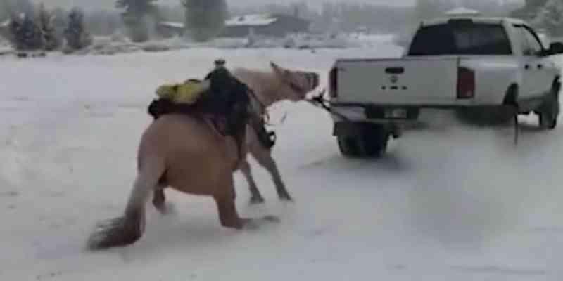 Casal que arrastou cavalo preso a caminhonete é detido por maus-tratos