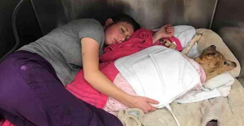 Veterinária dorme junto de cachorro queimado para que ele não se sinta desprotegido