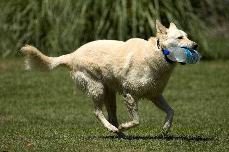 Doando tampinhas, você ajuda a castrar animais de rua em Aparecida de Goiânia, GO