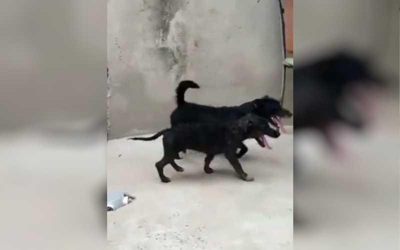 Cachorros abandonados na porta de abrigo em Goiânia Goiás — Foto: Reprodução/TV Anhanguera